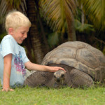Attractions_on_La_Digue_Seychelles_Giant_Tortoises