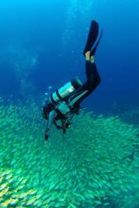 Diving off La Digue Island, Seychelles