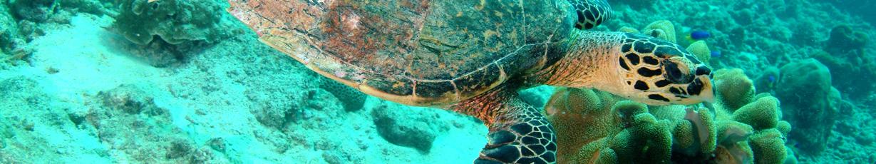Diving_in_Seychelles_Slider_04