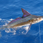Fishing_on_La_Digue_Island_Seychelles_(sailfish)